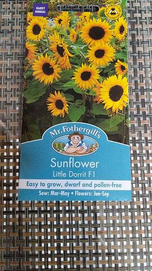 Sunflower Little Dorrit F1