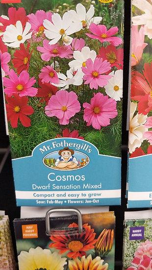 Cosmos Dwarf Sensation