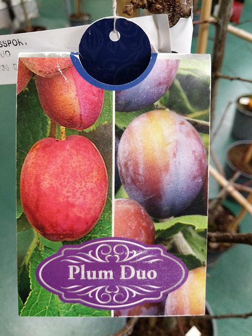 Plum Duo