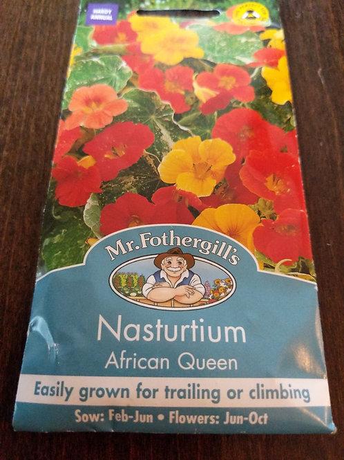 Nasturtium African Queen
