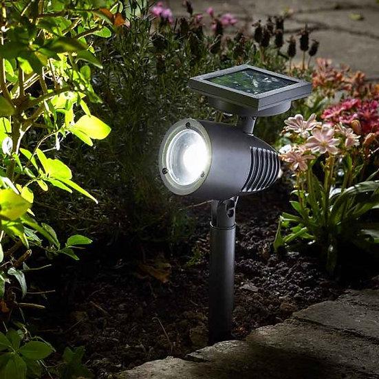Alpha 365 Spot Light