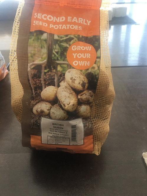 Seed potatoes British queen