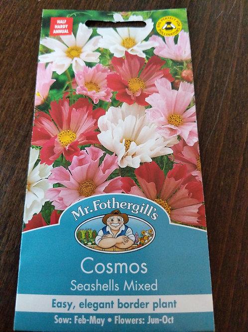 Cosmos seashells mixed