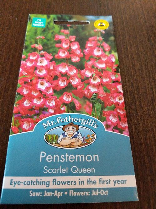 Penstemon scarlet queen