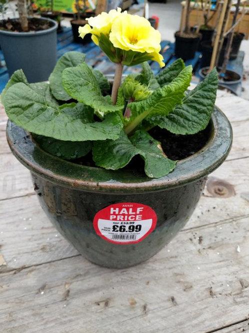 Filled green pot