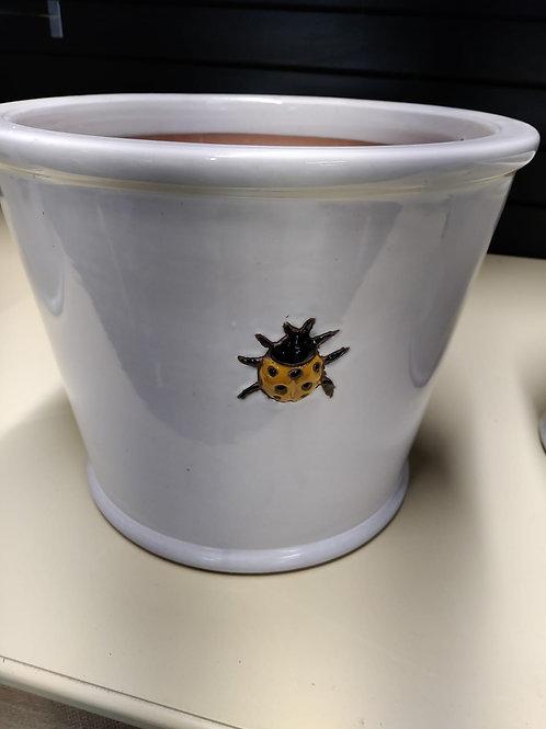 Yellow Lady Bird Pots