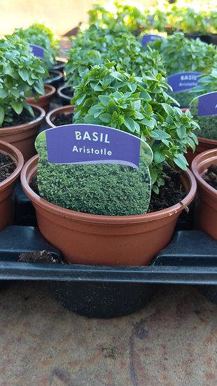 Basil Aristotle