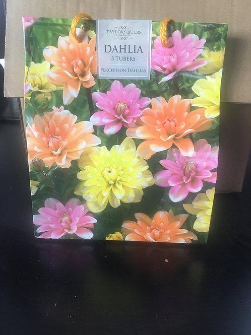 Dahlia 5 Tubers