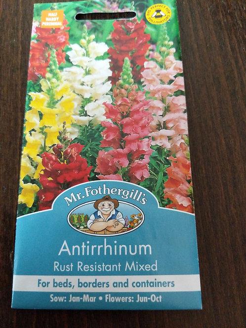 Antirrhinum
