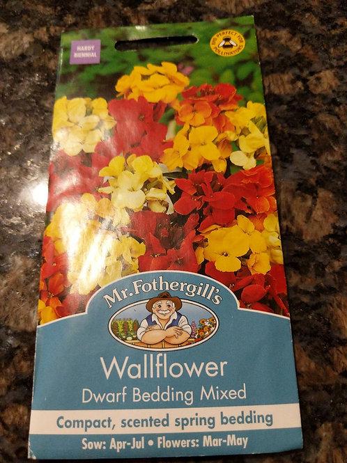 Wallflower Dwarf Bedding Mixed