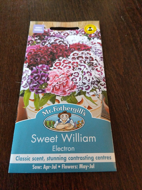 Sweet William Electron