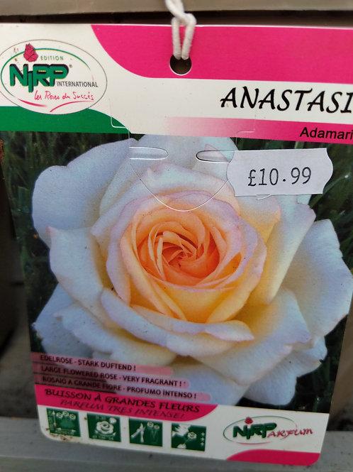 Rose Anastasia Adamariat