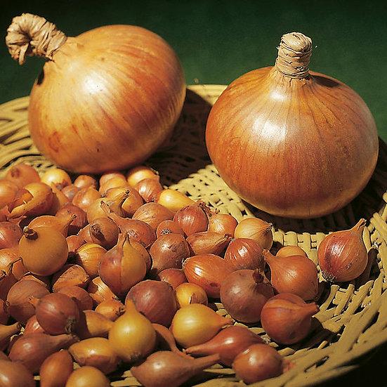 sturon onion sets(50)
