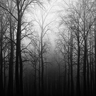 Studio Render foresta con nebbia