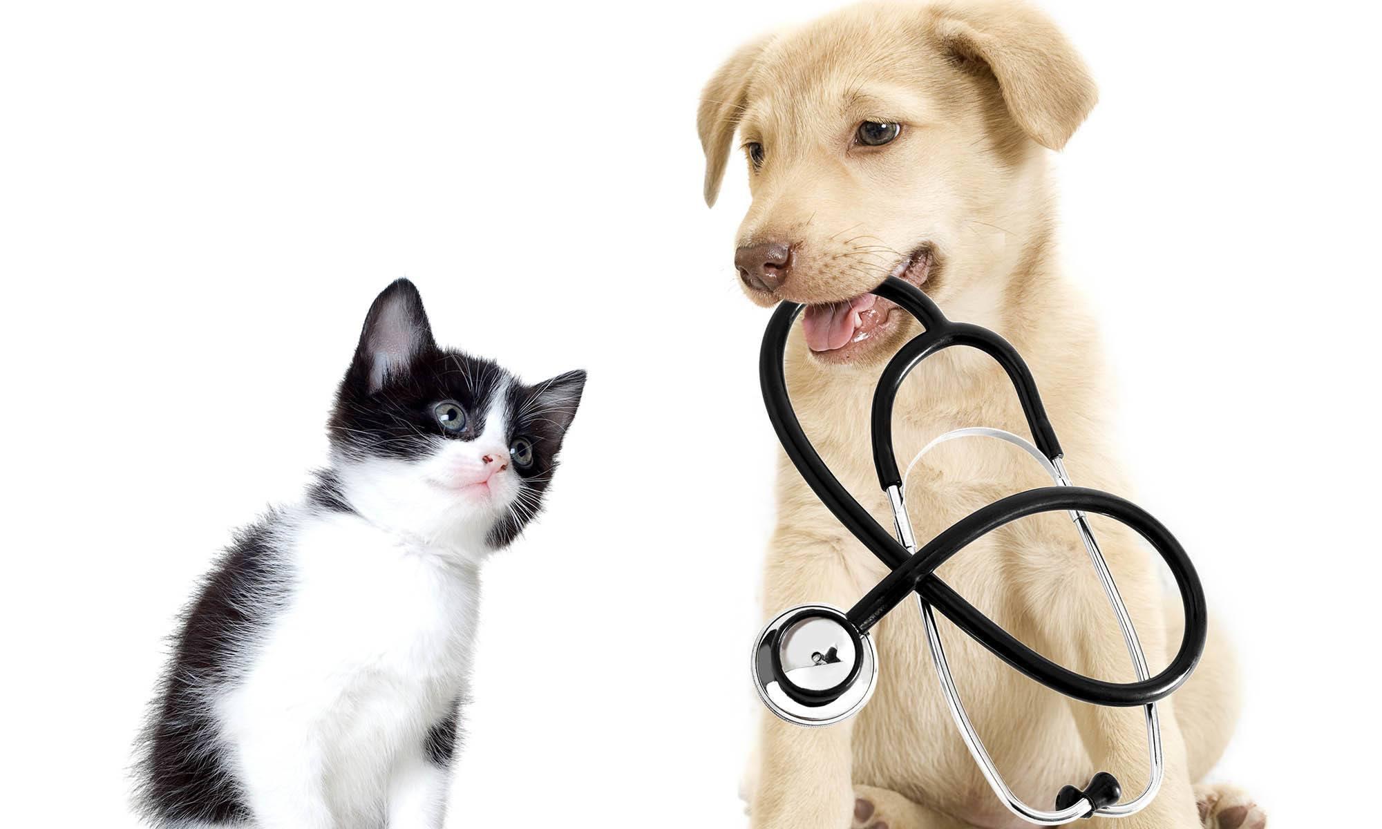 Veterinary Trips