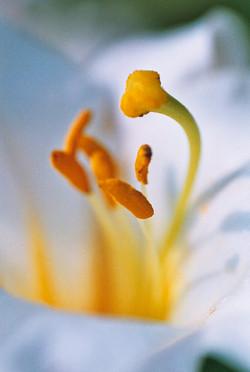 fleurs03a
