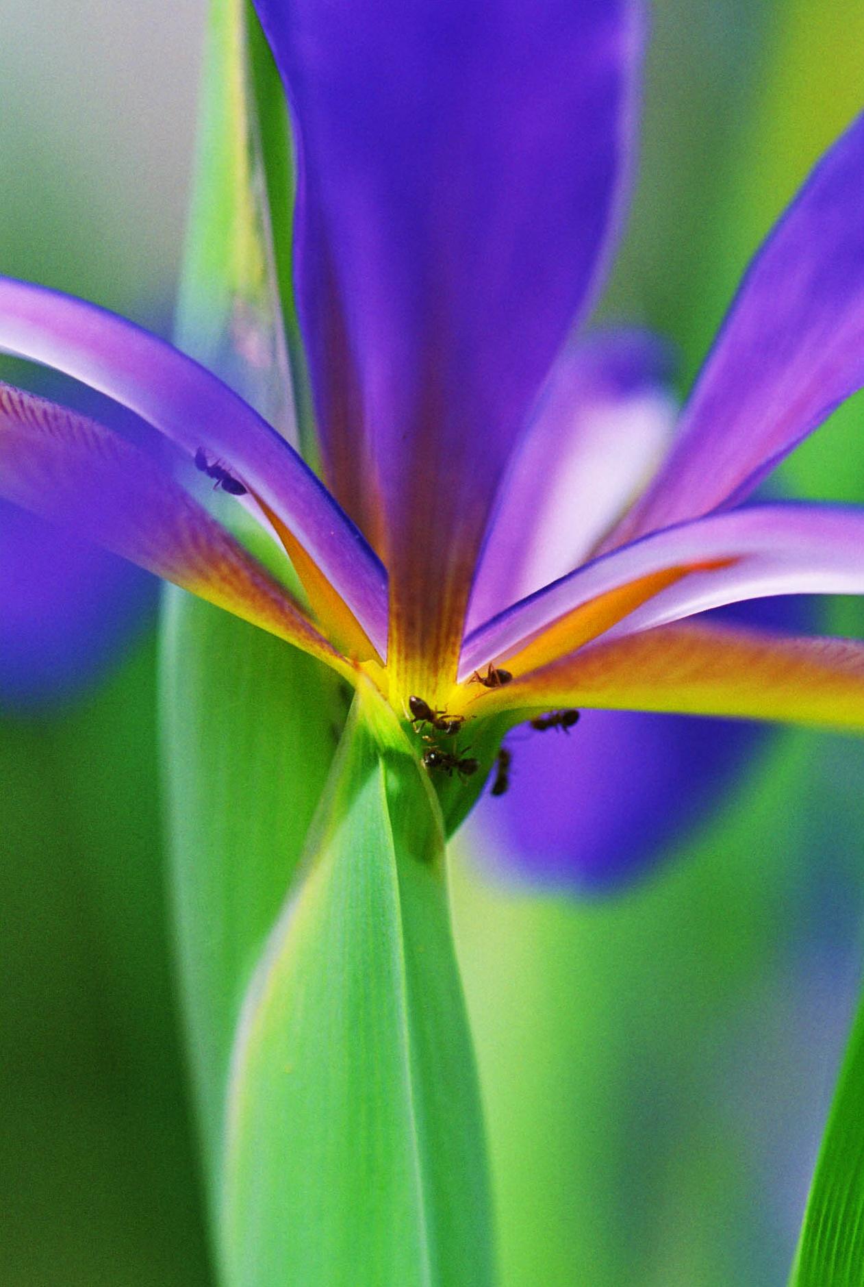 fleurs01a