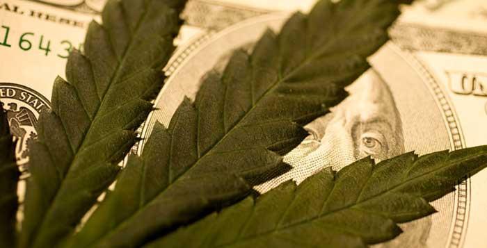 Marijuana Big Business