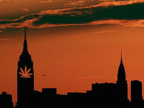 New York Cannabis Industry