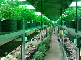 Banking On Marijuana Money
