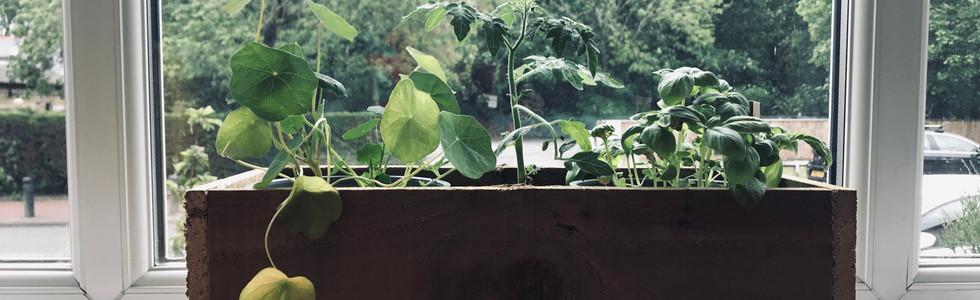 Herb-Kitchen Growing Kits