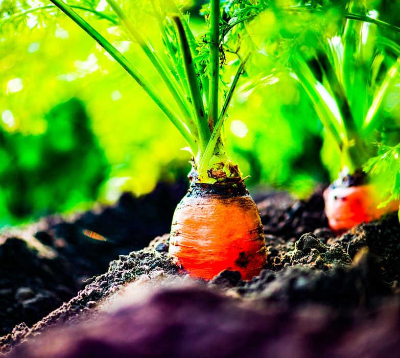 Meade Farm Growing 8