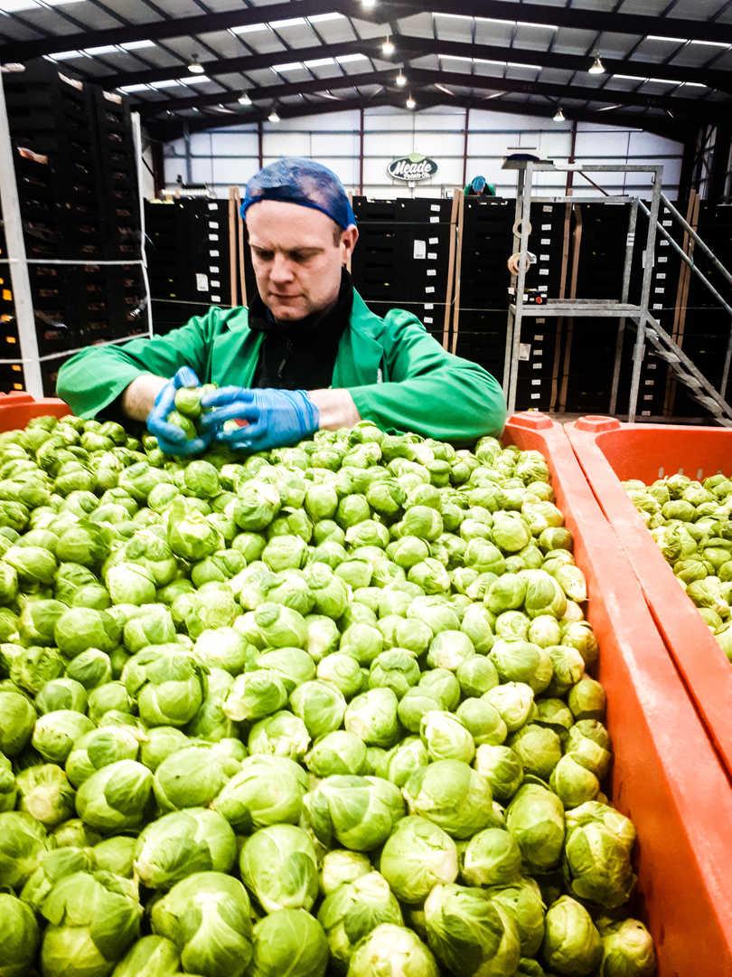 Meade Farm Quality Assurance Team 15