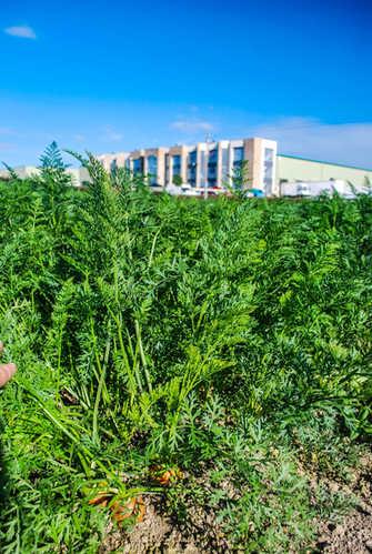 Meade Farm Growing 22
