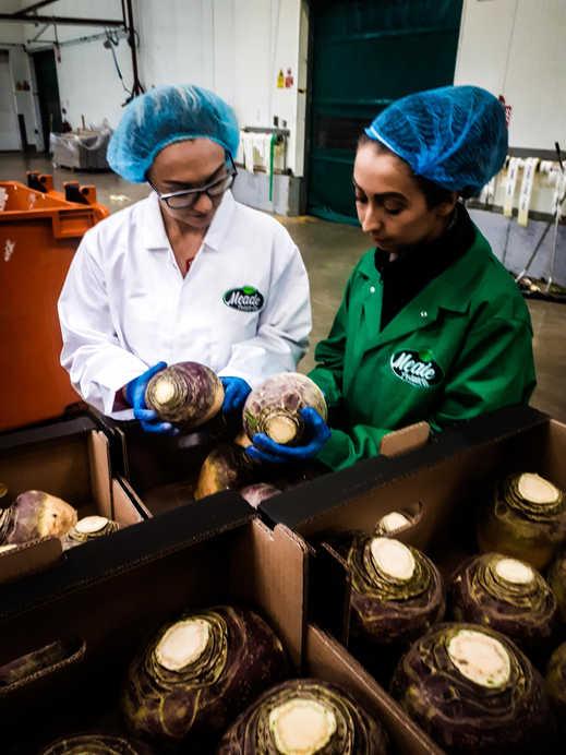 Meade Farm Quality Assurance Team 8