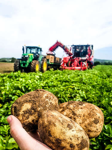 Meade Farm Our Potatoes