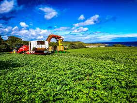 Meade Farm Growing 2