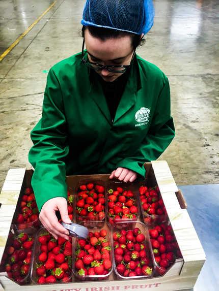 Meade Farm Quality Assurance Team 3