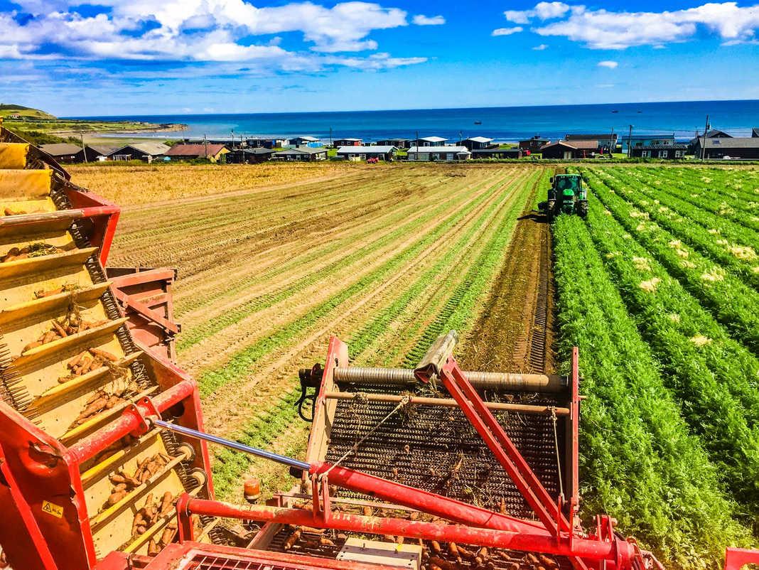 Meade Farm Growing 15