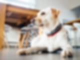 dog training south shore, ma Weymouth Braintree Hingham