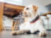 Ingleby Pet Supplies Dog Products Shop Online UK