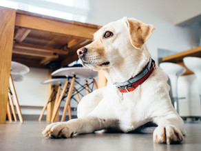 ARE FLEA AND TICK MEDICATION COLLARS AND PILLS BAD FOR YOUR PET?