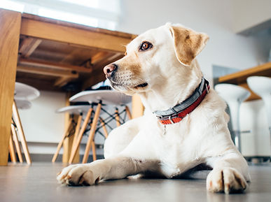 dog laying in front of table and chairs
