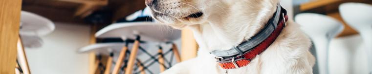Dog pet sitter walker