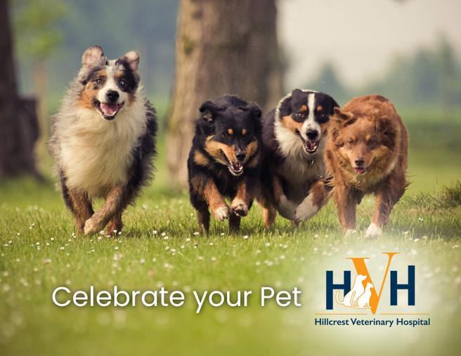 Celebrate your Pet!