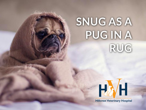 Winter Pet Care: Keep you pet as snug as a Pug in a rug this winter!