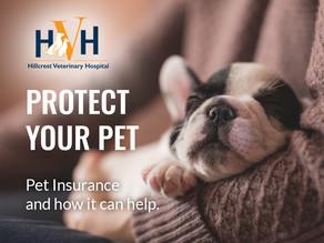 Pet Insurance: Protect Your Pet