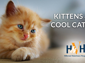 Kittens & Cool Cats