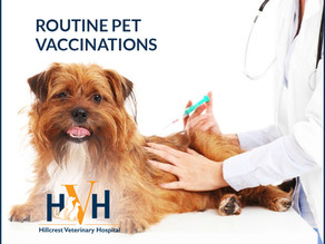 Pet Vaccines: What you should know