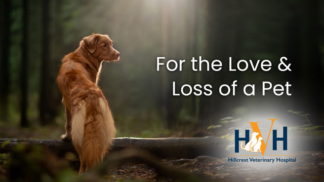 For the Love and Loss of a Pet