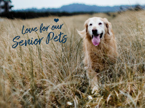 Taking Care of your Senior Pets