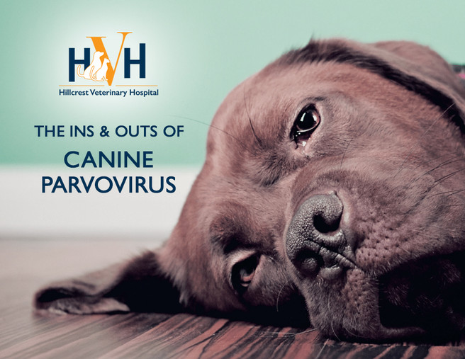 Protect your dog from Canine Parvovirus