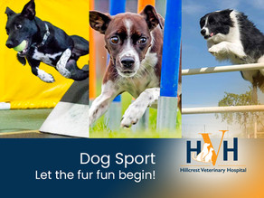 Let the Fur Fun Begin with Dog Sports