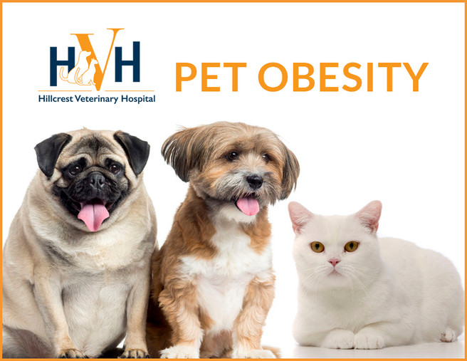 Pet Obesity. How to keep your pets expanding waistline in check.