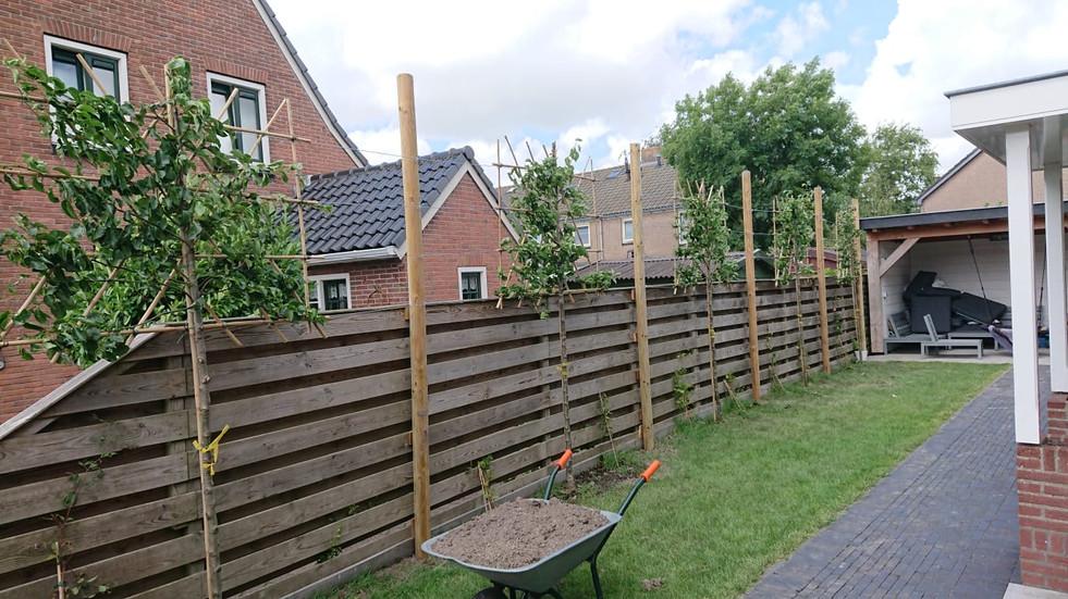 Bomen geplant achtertuin 2 onder 1 kap