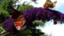 Vlinders Couwenhof